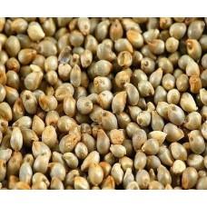 Multicut Bajra Seeds